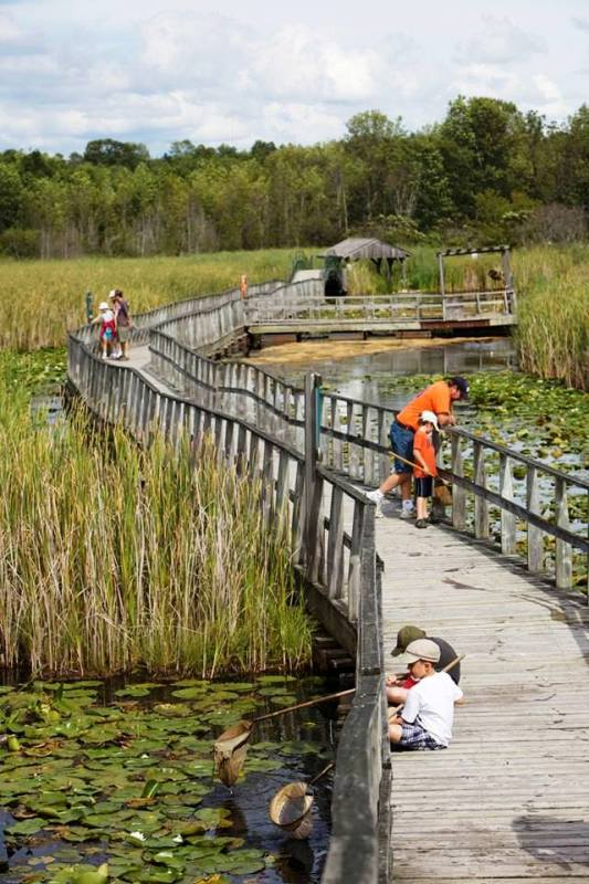 Wye Marsh Wildlife Centre Boardwalk, Midland, Ontario